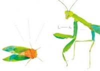 36_declic-clac-aux-insectes.jpg